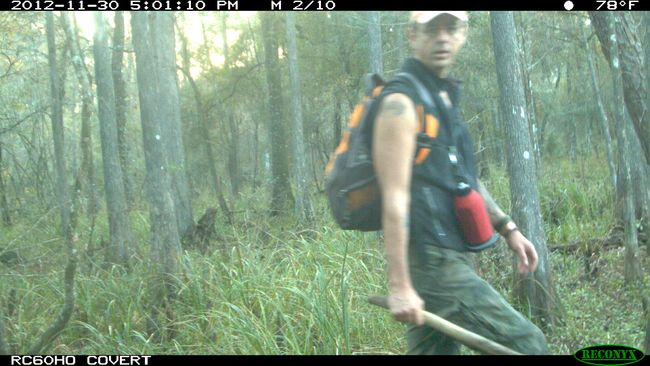 Securing the trail cam in West Track Green Swamp Florida