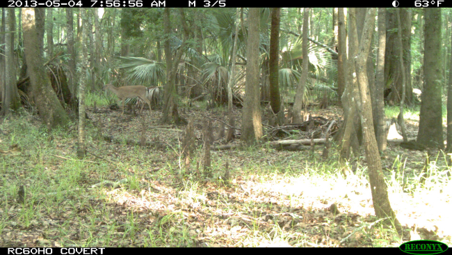 New trail cam images...setting up for major deployment