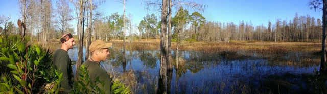 The Green Swamp
